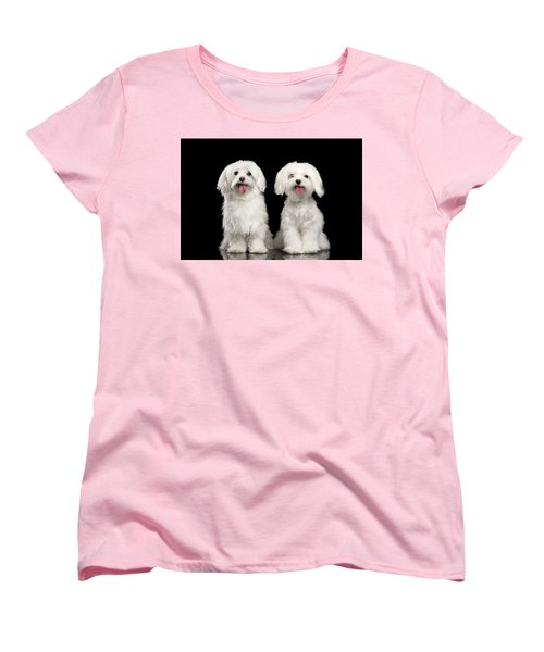 Two Happy White Maltese Dogs Sitting, Looking In Camera Isolated Women's T-Shirt (Standard Cut) by Sergey Taran