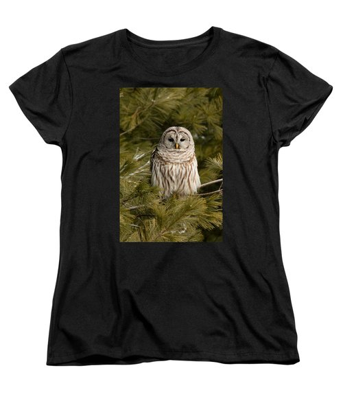 Barred Owl In A Pine Tree. Women's T-Shirt (Standard Cut) by Michel Soucy