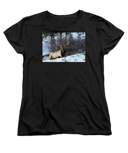Rocky Mountain Elk Women's T-Shirt (Standard Cut)
