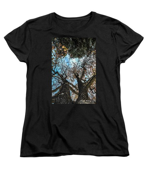 1st Tree Women's T-Shirt (Standard Cut) by Gandz Photography