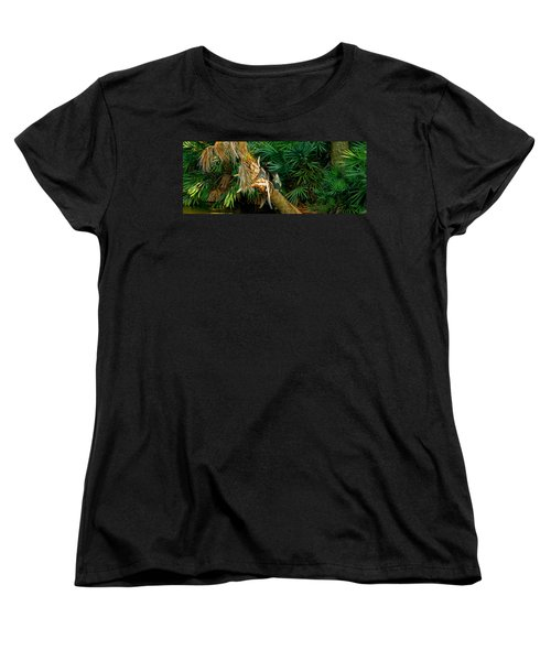 Anhinga Anhinga Anhinga On A Tree Women's T-Shirt (Standard Cut) by Panoramic Images