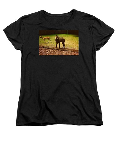 Billy Goat Keeping Lookout Women's T-Shirt (Standard Cut) by Amazing Photographs AKA Christian Wilson