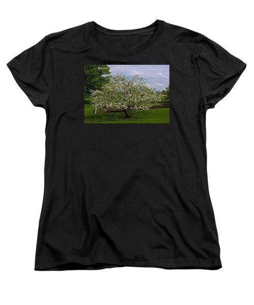 Women's T-Shirt (Standard Cut) featuring the painting Birth Of Apples by John Haldane