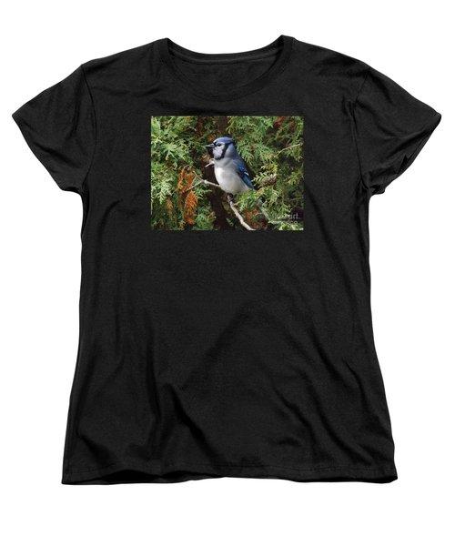 Women's T-Shirt (Standard Cut) featuring the photograph Blue Jay In Cedar Tree 2 by Brenda Brown