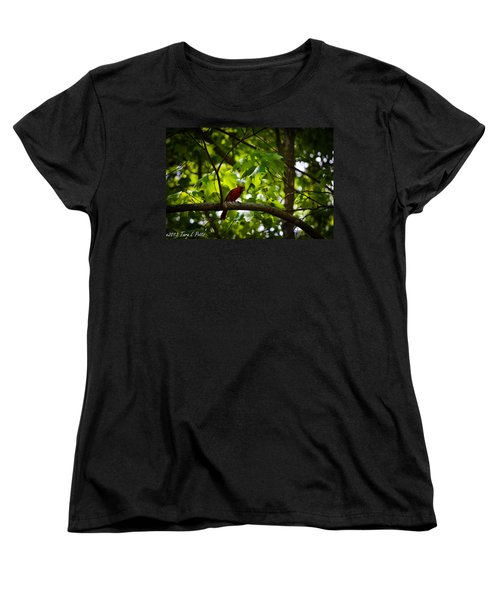 Cardinal In The Trees Women's T-Shirt (Standard Cut) by Tara Potts