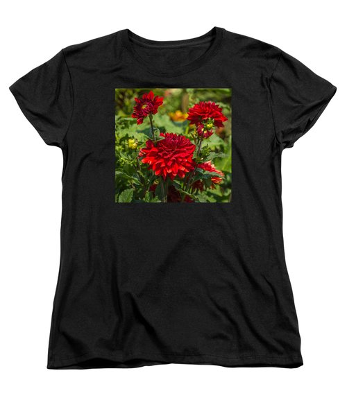 Cluster Of Dahlias Women's T-Shirt (Standard Cut) by Jane Luxton
