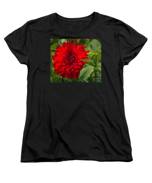 Dahlia Perfection Women's T-Shirt (Standard Cut) by Jane Luxton