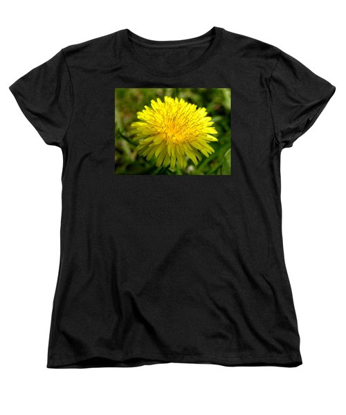 Dandelion Women's T-Shirt (Standard Cut) by Ron Harpham