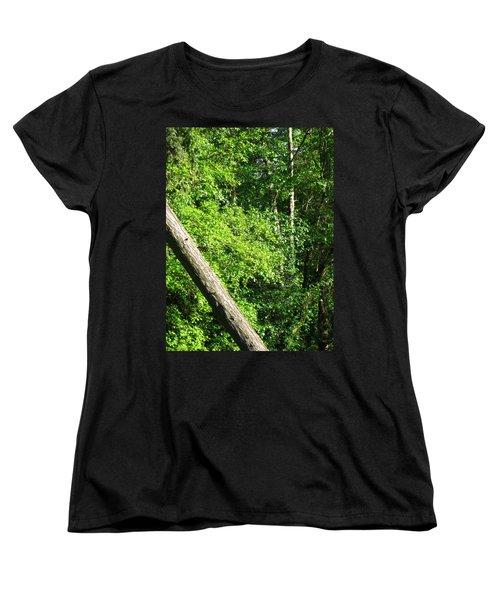 Greenbelt Fall Women's T-Shirt (Standard Cut) by David Trotter