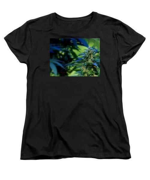 Harvest Time Women's T-Shirt (Standard Cut) by Jeanette C Landstrom