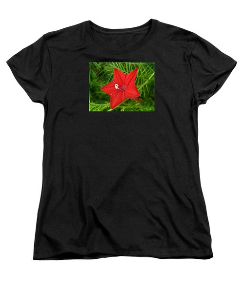 Hummingbird Vine Women's T-Shirt (Standard Cut)