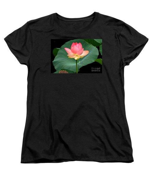 Lotus Of Late August Women's T-Shirt (Standard Cut) by Byron Varvarigos