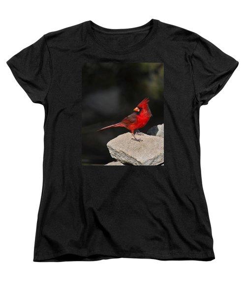 Male Cardinal Women's T-Shirt (Standard Cut)
