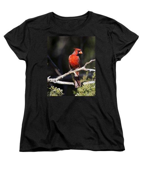 Male Northern Cardinal Women's T-Shirt (Standard Cut)