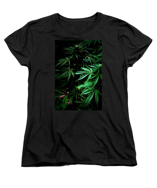 Nature's Medicine Women's T-Shirt (Standard Cut) by Jeanette C Landstrom