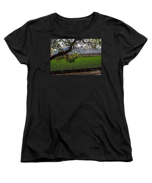 Panoramic Of Winter Lettuce Women's T-Shirt (Standard Cut) by Robert Bales