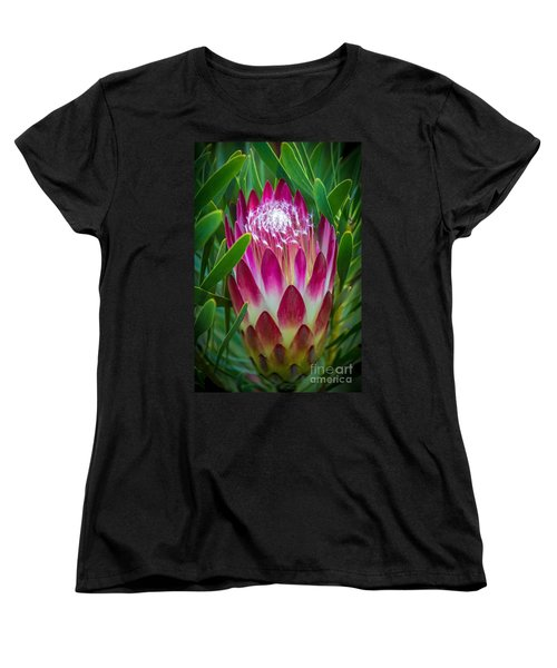 Protea In Pink Women's T-Shirt (Standard Cut) by Kate Brown