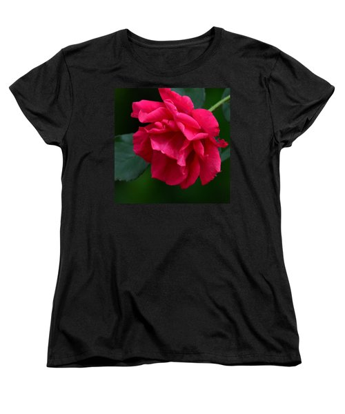 Red Rose 2013 Women's T-Shirt (Standard Cut) by Maria Urso
