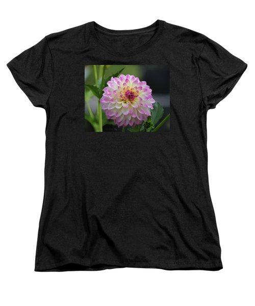 The Beautiful Dahlia Women's T-Shirt (Standard Cut) by Jeanette C Landstrom