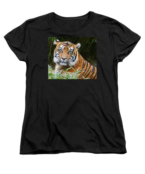 The Eyes Of A Sumatran Tiger Women's T-Shirt (Standard Cut) by Emmy Marie Vickers