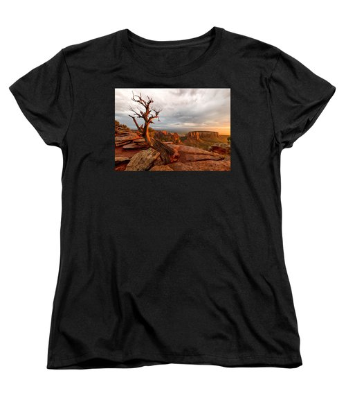 The Light On The Crooked Old Tree Women's T-Shirt (Standard Cut) by Ronda Kimbrow