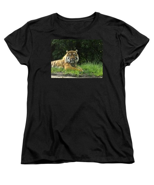 Women's T-Shirt (Standard Cut) featuring the photograph Tiger At Rest by Lingfai Leung