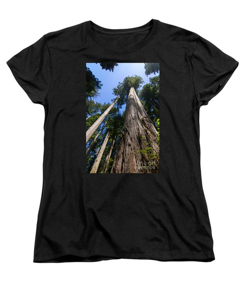 Towering Redwoods Women's T-Shirt (Standard Cut)