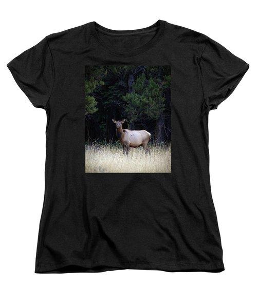 Forest Elk Women's T-Shirt (Standard Cut) by Steve McKinzie