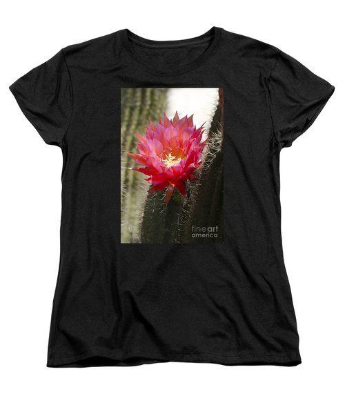 Red Cactus Flower Women's T-Shirt (Standard Cut) by Jim And Emily Bush