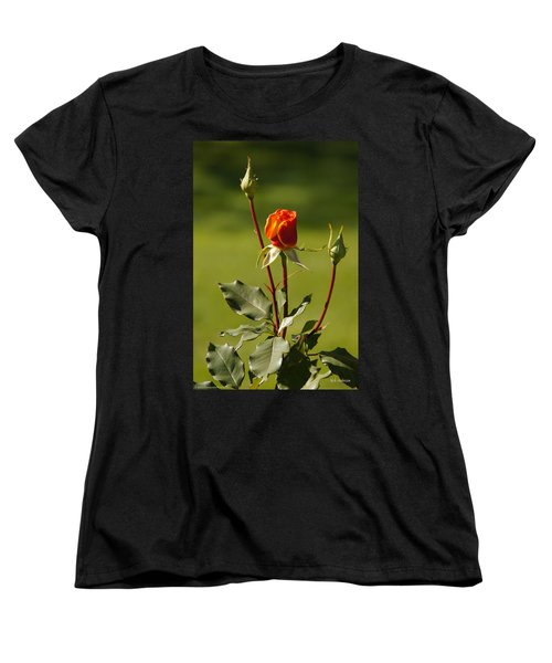Autumn Rose Women's T-Shirt (Standard Cut) by Mick Anderson