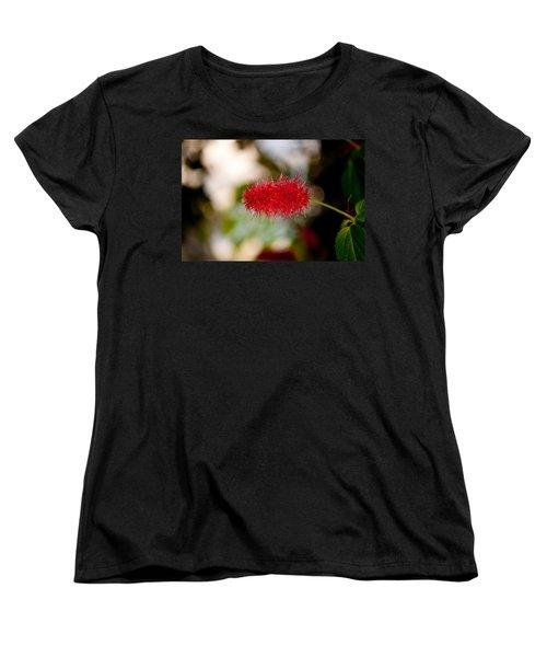 Crimson Bottle Brush Women's T-Shirt (Standard Cut) by Tikvah's Hope