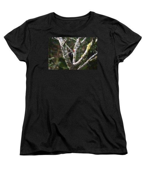 Pileated Woodpecker In Cherry Tree Women's T-Shirt (Standard Cut) by Kym Backland