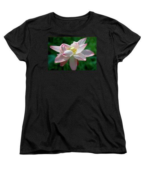 Pink Attraction Women's T-Shirt (Standard Cut) by LeeAnn McLaneGoetz McLaneGoetzStudioLLCcom