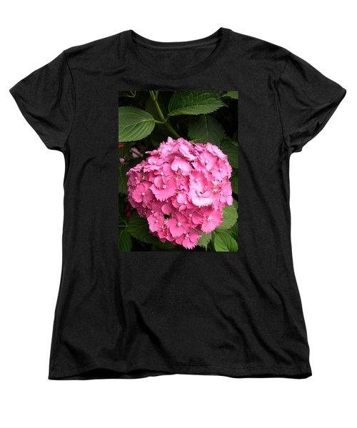 Pink Hydranga Women's T-Shirt (Standard Cut) by Claude McCoy