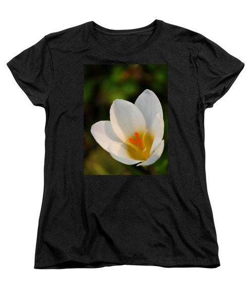 Pretty White Crocus Women's T-Shirt (Standard Cut) by JD Grimes