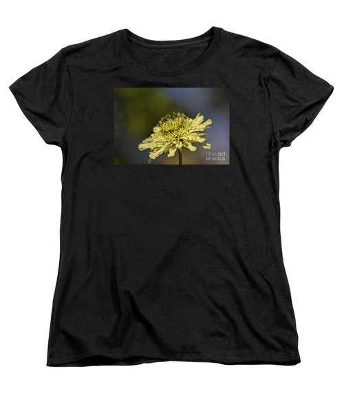Women's T-Shirt (Standard Cut) featuring the photograph Soft Yellow. by Clare Bambers