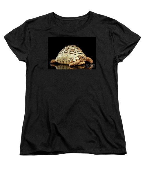 Closeup Leopard Tortoise Albino,stigmochelys Pardalis Turtle With White Shell On Isolated Black Back Women's T-Shirt (Standard Cut) by Sergey Taran