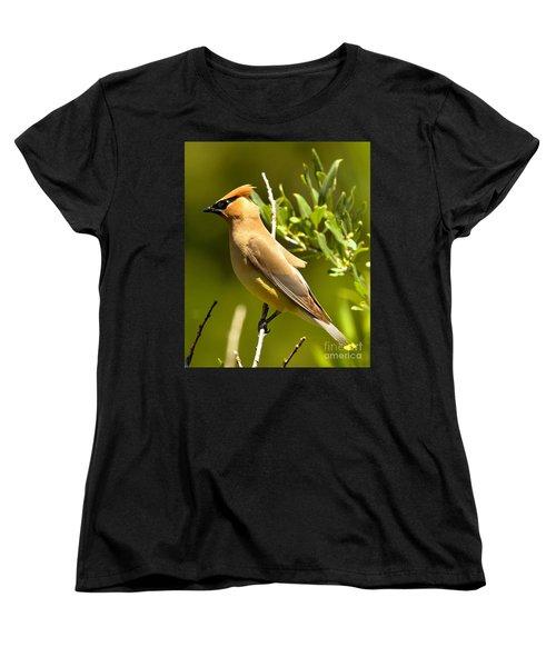 Cedar Waxwing Closeup Women's T-Shirt (Standard Cut) by Adam Jewell