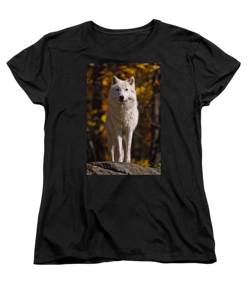 Women's T-Shirt (Standard Cut) featuring the photograph Arctic Wolf On Rocks by Michael Cummings