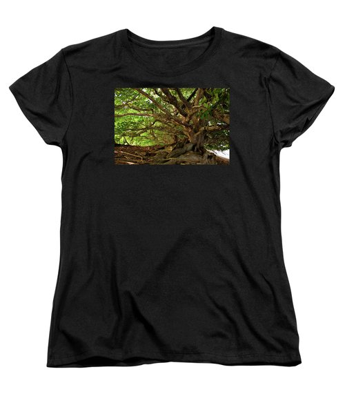 Branches And Roots Women's T-Shirt (Standard Cut) by James Eddy