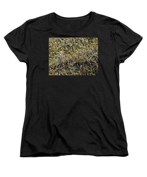 Camouflaged Red-bellied Woodpecker Women's T-Shirt (Standard Cut) by Carolyn Marshall