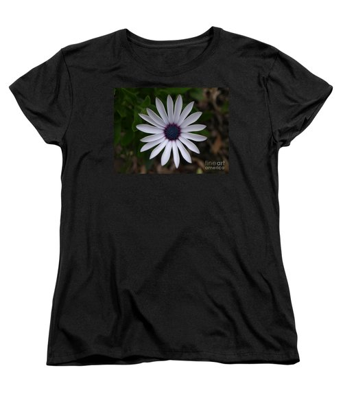 Cape Daisy Women's T-Shirt (Standard Cut) by Richard Brookes