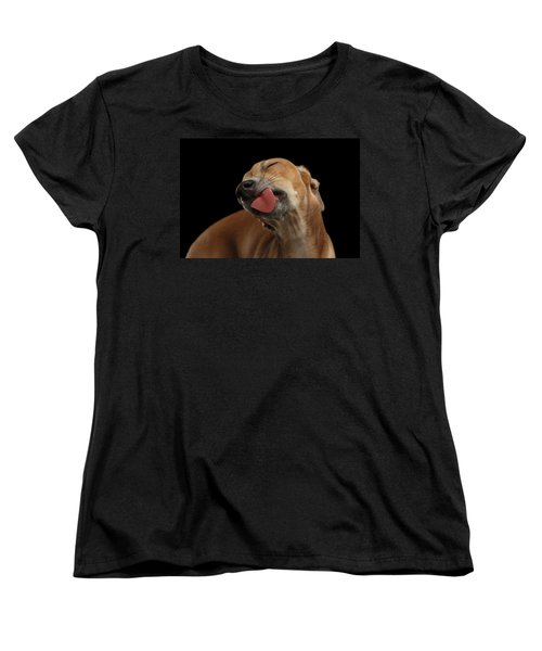 Closeup Cute Italian Greyhound Dog Licked With Pleasure Isolated Black Women's T-Shirt (Standard Cut) by Sergey Taran