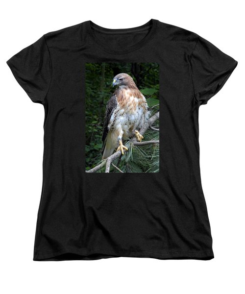 Coopers Hawk Women's T-Shirt (Standard Cut) by Dave Mills