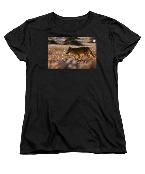 Death Valley Coyote And Flowers Women's T-Shirt (Standard Cut) by Daniel Woodrum