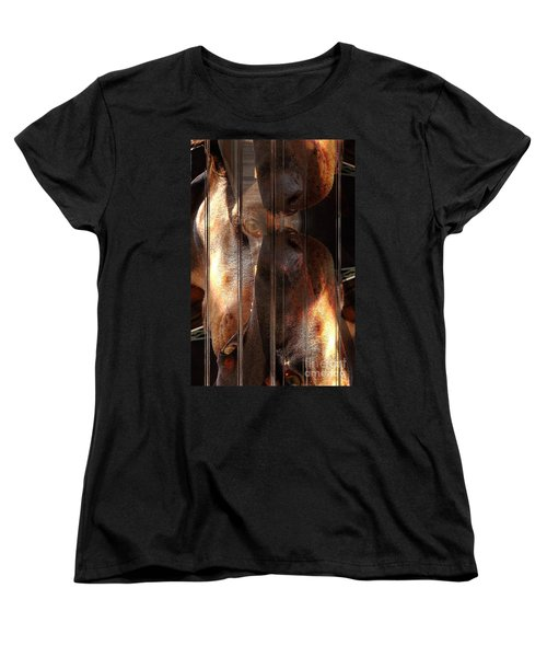 Doberman Pincher Women's T-Shirt (Standard Cut) by Liane Wright