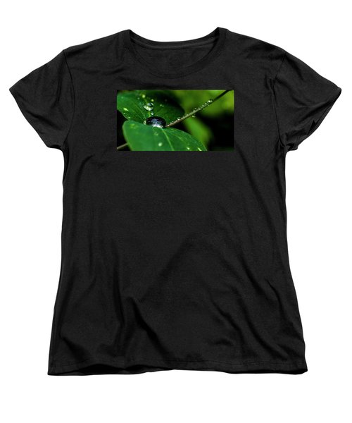 Women's T-Shirt (Standard Cut) featuring the photograph Droplets On Stem And Leaves by Darcy Michaelchuk