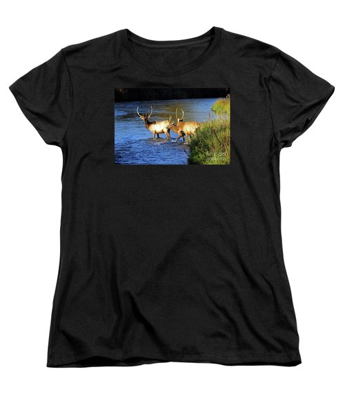 Elk Women's T-Shirt (Standard Cut) by Cindy Murphy - NightVisions