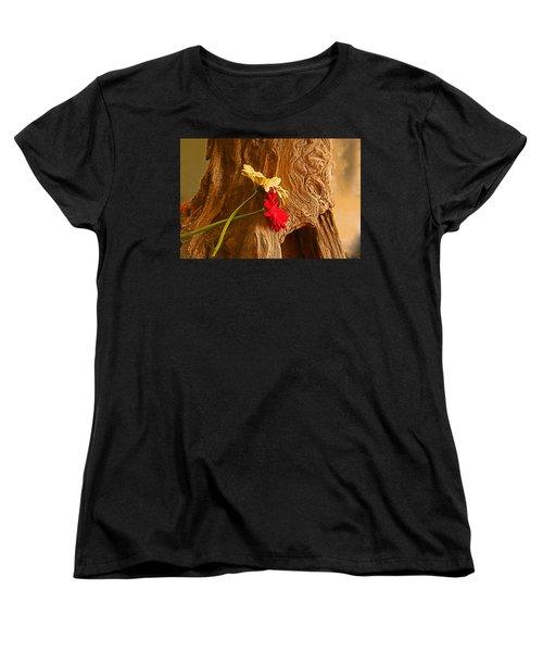 Gerber Daisy On Driftwod Women's T-Shirt (Standard Cut) by Ronald Olivier