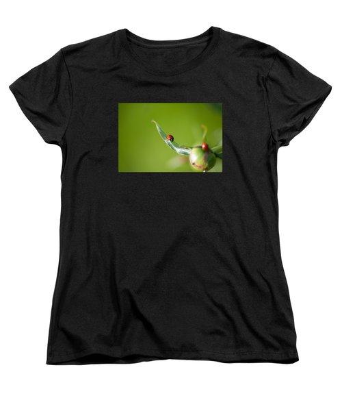 Ladybug On Flower Women's T-Shirt (Standard Cut) by Konstantin Sevostyanov